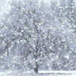 Праздник снегопада дарит звёзды с неба